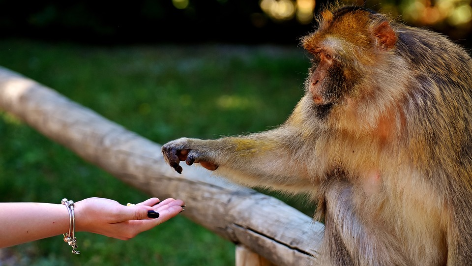 Hayvan saldırılarını engellemek